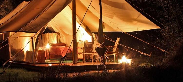 African safari   Safari Blog