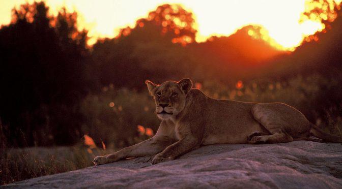 The Kruger Park