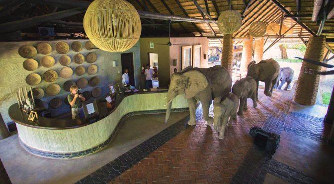 Zambia Lodges