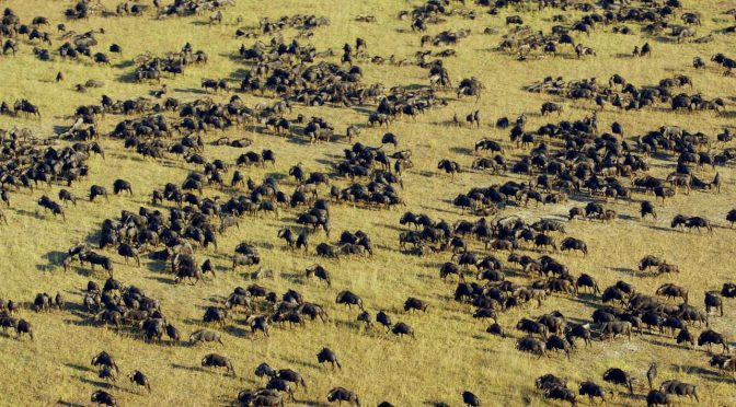 Liuwa Plains: An Undiscovered Safari Paradise