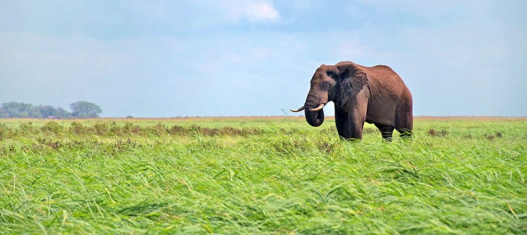 Chobe-National-Park-3-750x335