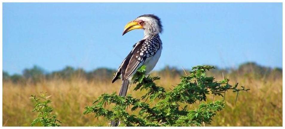 Dinokeng Game Reserve Birdlife