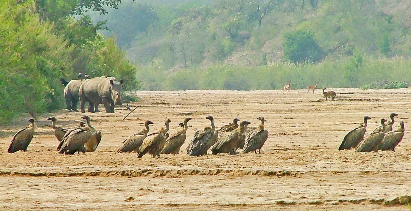 Hluluwe-Umfolozi-EKZN-Wildlife-Reserve-2