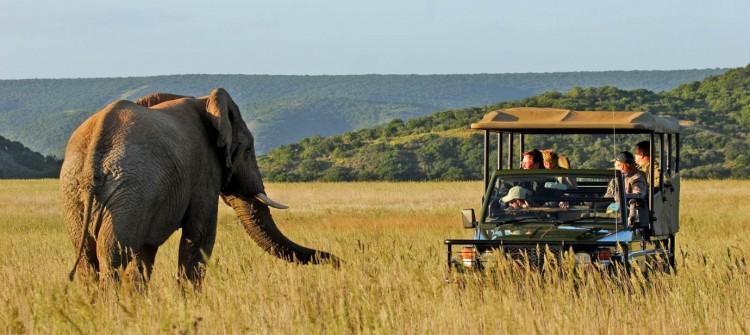 Shamwari Game Reserve Elephant
