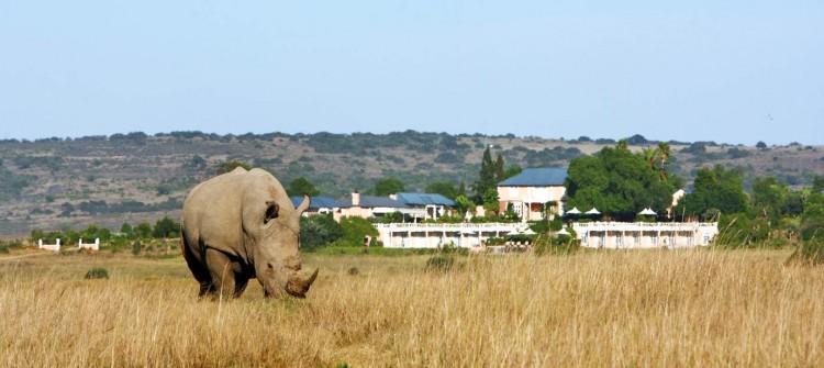Shamwari Game Reserve Lions