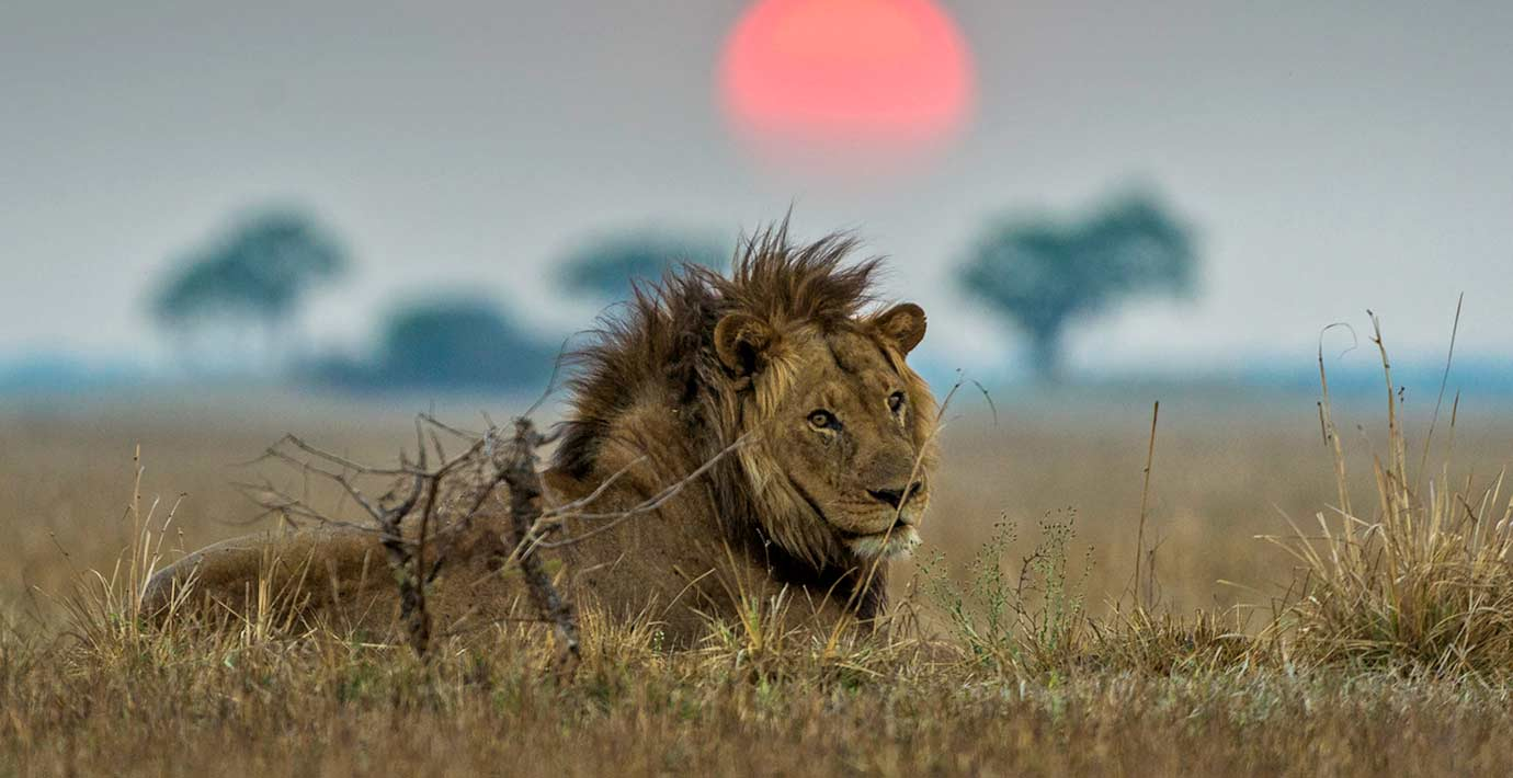 Best places in Africa to see lions in the wild